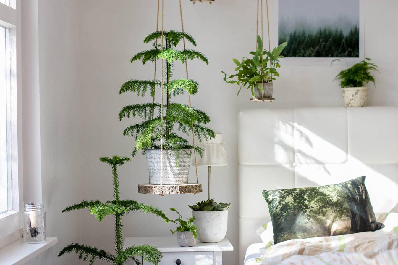 Urban Jungle - DIY Hängeregale aus Baumscheiben